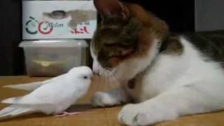 Burung ini coba membangunkan temanya yang lagi tidur