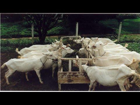 Curso Sistema Orgânico de Criação de Cabras - Cursos CPT