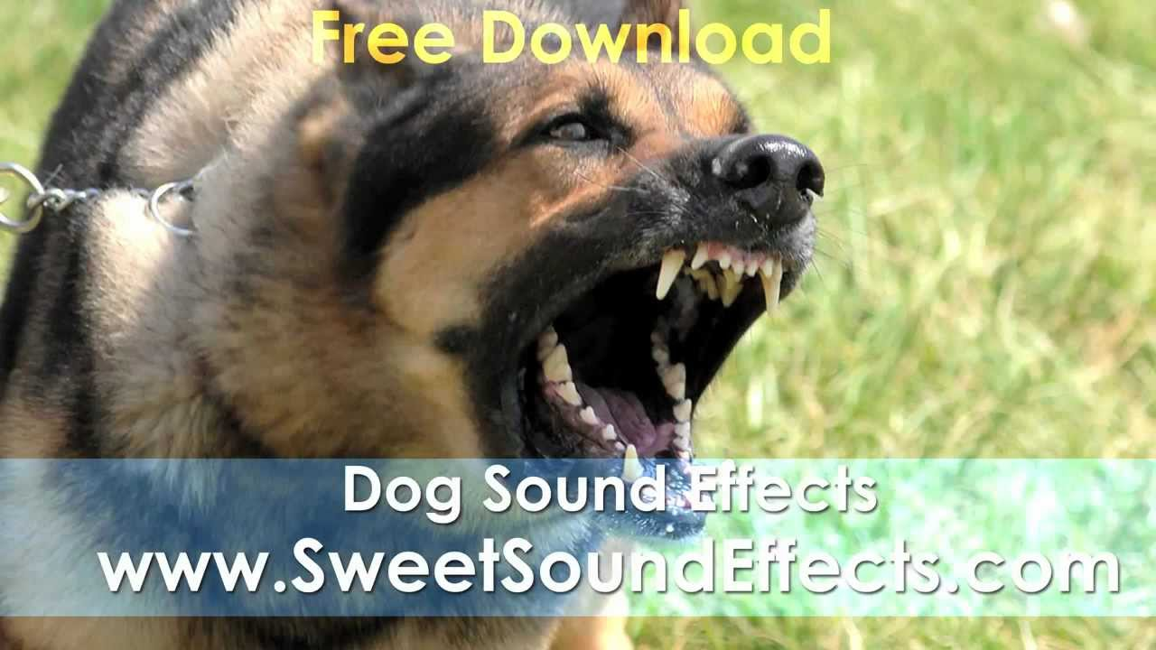 Free Sound Effect - Dog Bark Sound Effect