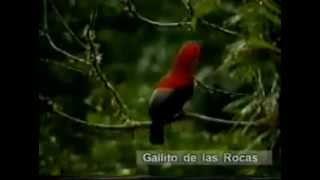 Biodiversidad: Flora Y Fauna