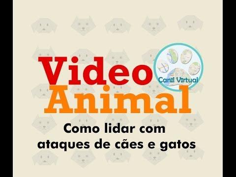 Vídeo Animal - Como lidar com ataques de cães e gatos