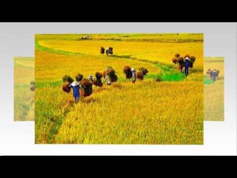 Miền trung trong tôi_ Hồ Quang Hiếu( kara-lyric.720pHD)