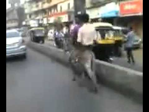 Hilarious donkey ride in traffic