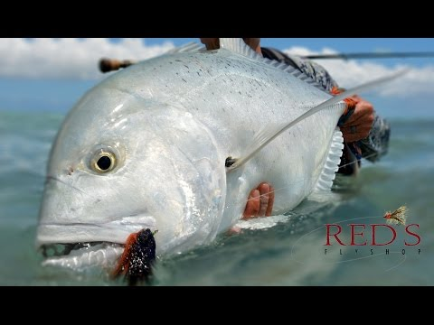 Giant Trevally Fishing, Tips, and Gear for Christmas Island