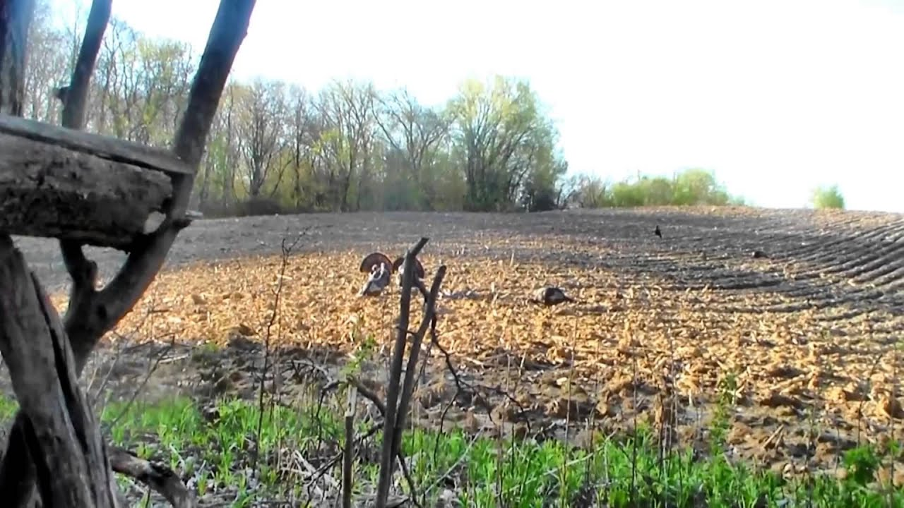 Spring 2014 iowa turkey hunting mad fowlers youtube for Iowa out of state fishing license