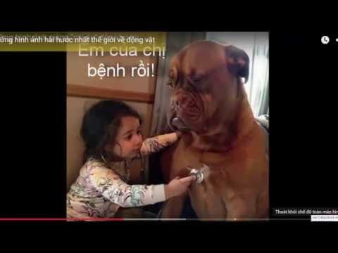 video clip những hình ảnh hài hước của động vật