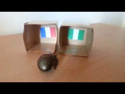 France vs Nigeria - FIFA WORLD CUP 2014 PREDICTION