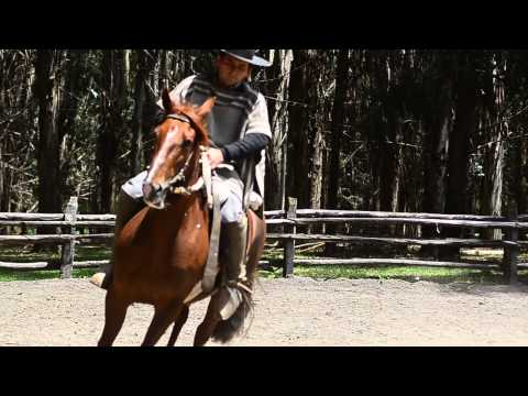 SELLO DE RAZA CABALLOS CHILENOS select the best equi cell.mp4
