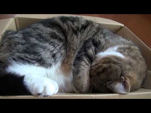 箱で寝るねこ。-Maru is sleeping in the box.-