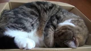 箱で寝るねこ。-Maru is sleeping in the box.-
