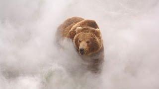 Terre des Ours - bande-annonce