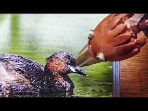 BIRDWATCHING with DABCHICK