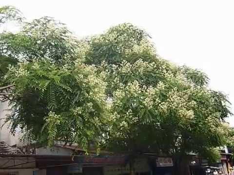 Thị trấn Quỳnh Côi chớm hè 2012.MOV