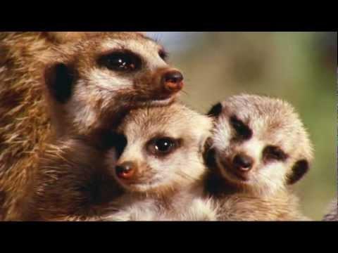 David Attenborough - Wonderful World - BBC HD 1080p Advertisement