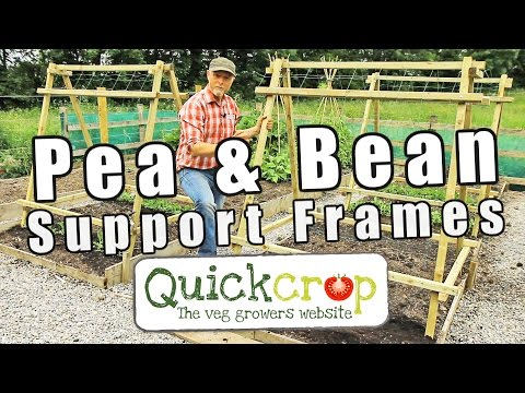Pea and Bean Support Frames