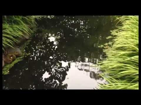 awesome green pond: my Daily Personal Vlog May 31, 2014