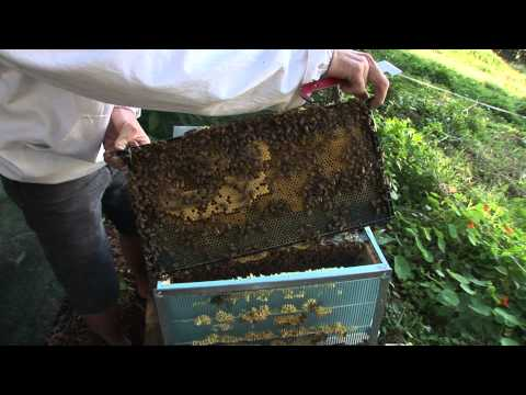How to keep Bees the basics