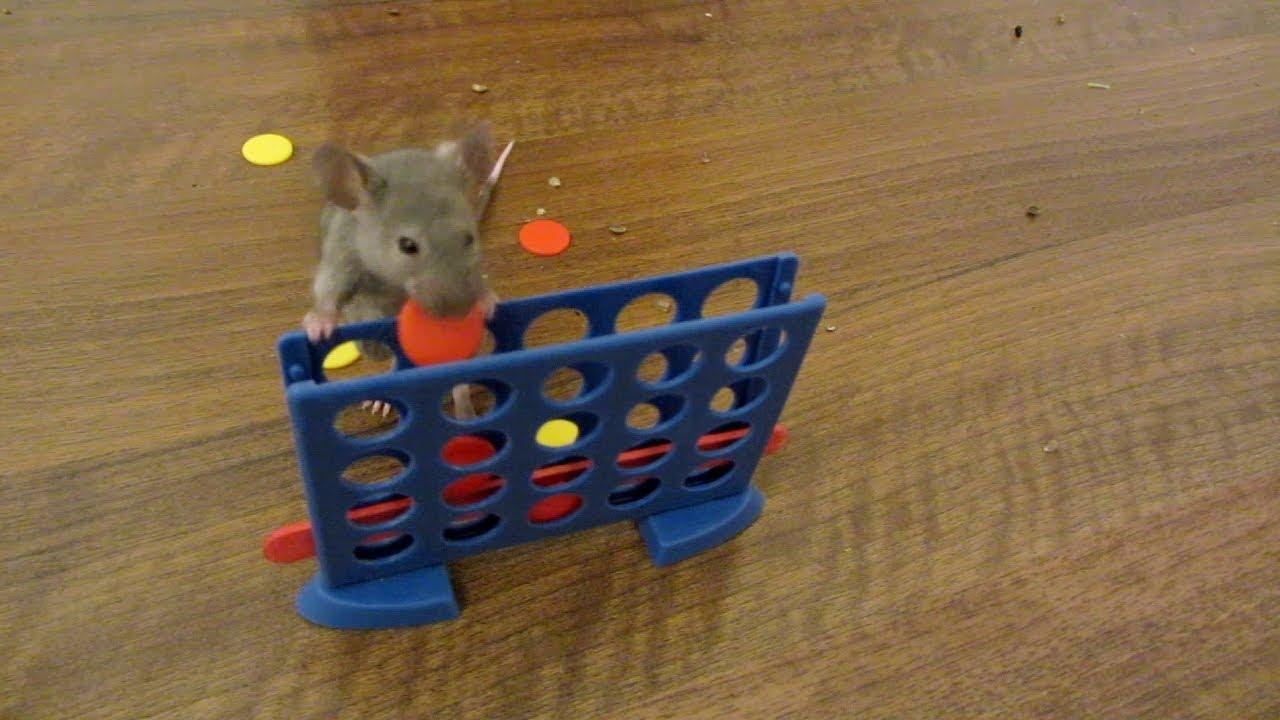 Les superbes tours des souris