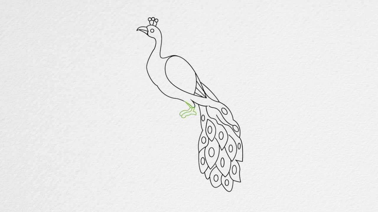 Peacock drawing step by step - photo#8