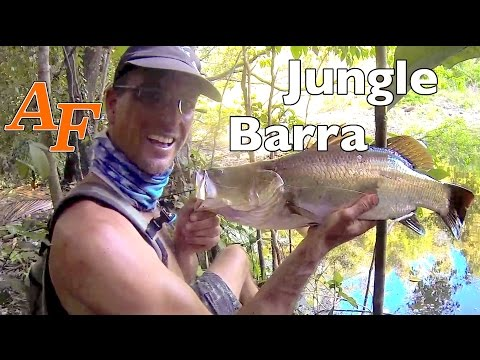 Barramundi n Tarpon Jungle fishing, Soft Plastic Lure Fishing, Andysfishing Barra Mania Mancing