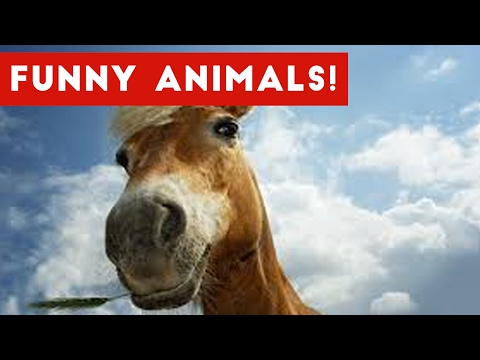 Funniest Pet Clips, Bloopers & Moments Caught On Tape 2017 | Funny Pet Videos