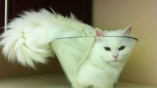 IMPOSSIBLE NOT TO LAUGH - Funny cat compilation