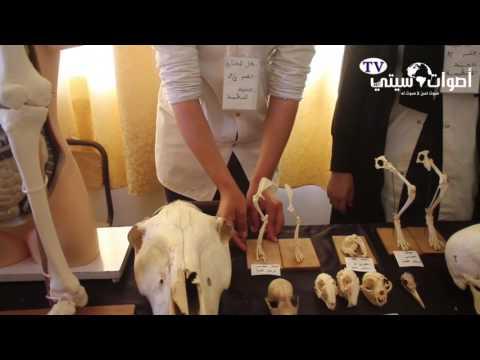 """بالفيديو.. معرض العلوم تحت شعار """"معرض العلوم إبداع وتميز"""" ببني انصار"""