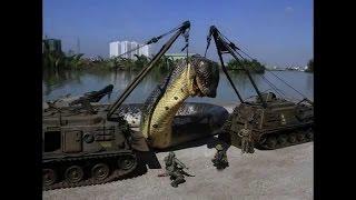 Capturada La Serpiente Mas Grande Del Mundo The Biggest