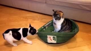 Cachorro de perro vs gato
