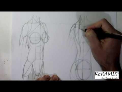 Como desenhar: Mulheres - Tronco Semi perfil - Frente x Costas - Músculos Simplificados