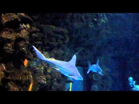 Mandalay Bay Shark aquarium - Las Vegas