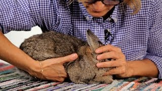 How To Handle A Pet Rabbit Pet Rabbits