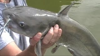CATFISHING HOW TO CATCH BIG CATFISH,CATFISHING A WHOLE NEW