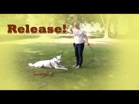 Adding a release- clicker dog training tricks