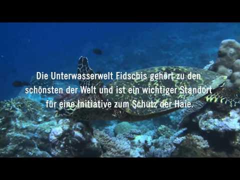 Projects Abroad Meeresbiologie auf den Fidschi-Inseln