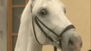 Dramatic Horse