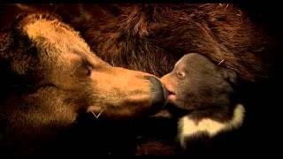 Osos (Bears, 2014) De Disneynature. TRAILER DOBLADO