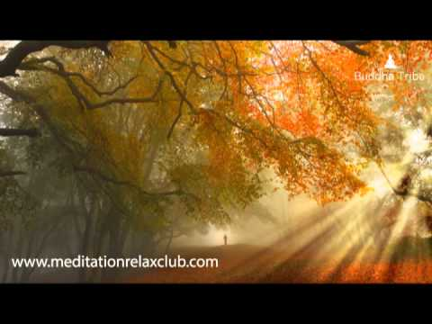 Zen Stories: Nature Sounds and Meditation Music