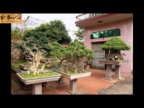 Vĩ BonSai - Yêu Cây Cảnh -  Love Bonsai - Bonsai Bắc Giang