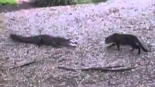 Peleas Entre Animales Salvajes :v