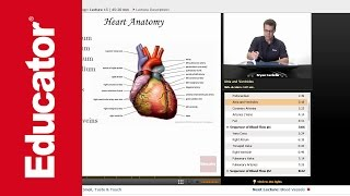 """Heart"" 