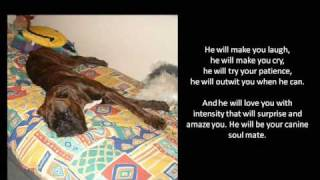 Boxer Dog Poem http://www.youtube.com/all_comments?v=tQf2rHGm25Q
