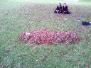 why is there a pile of leaves,film funny leaves short