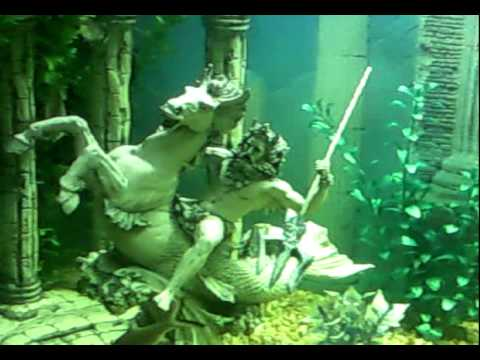Mis peces de agua dulce acuario comunitario youtube for Peces agua dulce tropicales para acuario