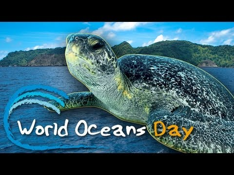 Celebrate World Oceans Day! -- June 8th