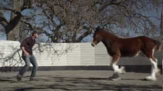 HD Clydesdales 2013 Budweiser Super Bowl Ad — Extended