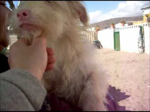 Animalinneed: Video of Yiyi