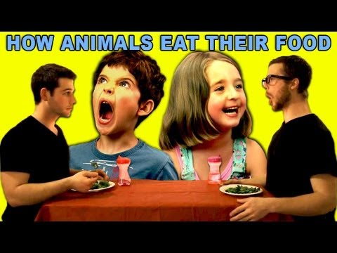 Kids React - How Animals Eat Their Food