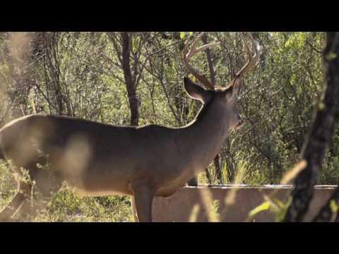 .460 XVR handgun in action on a whitetail hunt