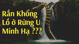 Phát hiện con rắn khổng lồ đang sống trong rừng U Minh Hạ
